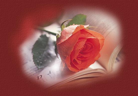 rosebooktop[1].jpg